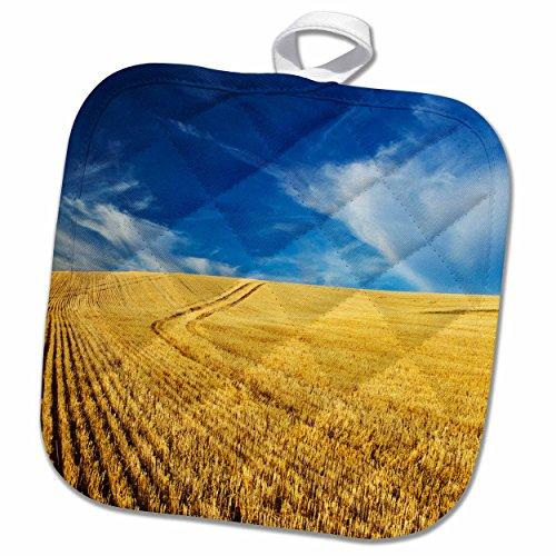 3dRose Danita Delimont - Farms - Farm Fields, Harvest Wheat, Palouse, Washington, USA - US48 TEG0425 - Terry Eggers - 8x8 Potholder (phl_148727_1)