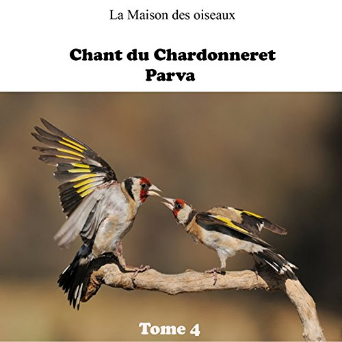 chant chardonneret kadous mp3