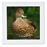3dRose Danita Delimont - Ducks - South America, Georgia. South Georgia Pintail portrait. - 20x20 inch quilt square (qs_257033_8)