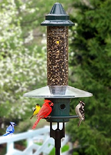(Brome Squirrel Buster Plus Squirrel Proof Bird Feeder with Pole and WeatherGuard Baffle)