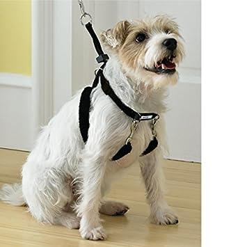 51jyGT9o3KL._SY355_ amazon com martha stewart pets training harness for dog xs l