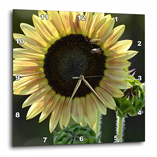 3dRose dpp_179158_3 Golden Sunflower-Wall Clock, 15 by 15-Inch