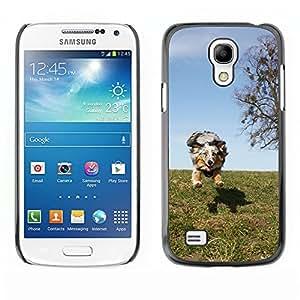 hello-mobile Etui Housse Coque de Protection Cover Rigide pour // M00136563 Animales perro de mascota Pastor // Samsung Galaxy S4 Mini i9190