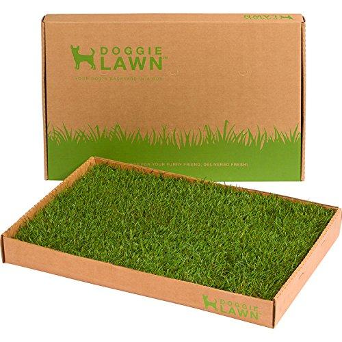 DoggieLawn Disposable Dog Potty - Real Grass - Medium 24x16