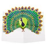 Peacock Pop-Up Notecards by Robert Sabuda