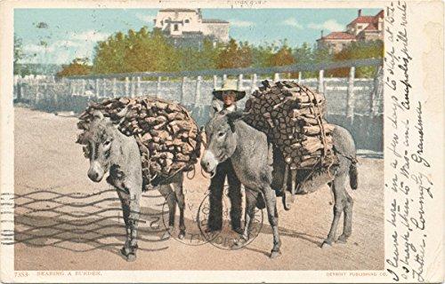 (Historic Pictoric Postcard Print | Bearing a Burden, Burro, 1903 | Vintage Fine Art)