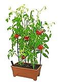 Emsco Group 2375D Start Pickin' Raised Small Grow Box, Terra Cotta