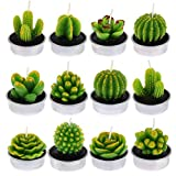 Xinzistar 12 Pieces Cactus Tealight Candles Handmade Delicate Succulent Cactus Candles for Birthday Party, Wedding, Spa, Home Decoration (Style 2)