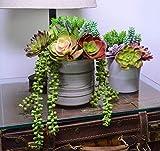 DECOROUS Artificial Succulents Plants - 14 Fake