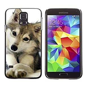 Be Good Phone Accessory // Dura Cáscara cubierta Protectora Caso Carcasa Funda de Protección para Samsung Galaxy S5 SM-G900 // cute puppy wolf snow winter pet canine
