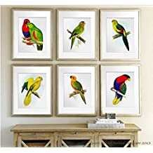 Tropical Birds Parrots Art Decor Set of 6 Unframed Wall Art Prints, Living room Wall Decor