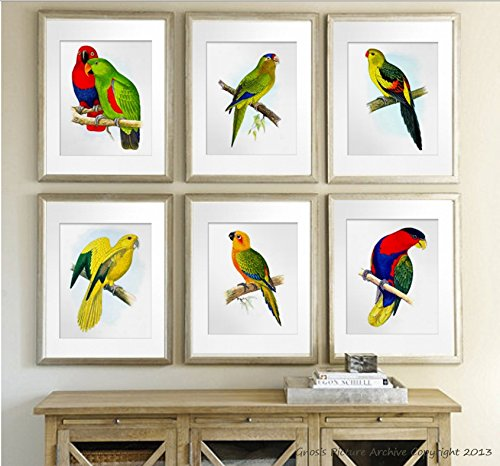 Tropical Birds Parrots Art Decor Set of 6 Unframed Wall Art Prints, Living room Wall Decor