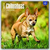 2017 Monthly Wall Calendar - Chihuahuas