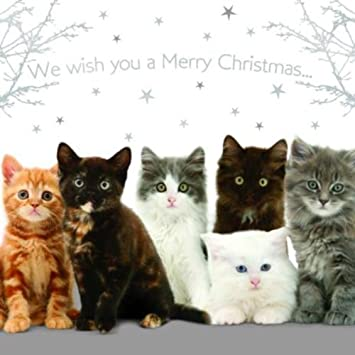 Mixed kittens cats christmas card pack we wish you a merry mixed kittens cats christmas card pack quotwe wish you a merry christmasquot m4hsunfo