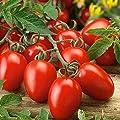 David's Garden Seeds Tomato Paste Roma Virginia Select SL9876 (Red) 50 Non-GMO, Heirloom Seeds