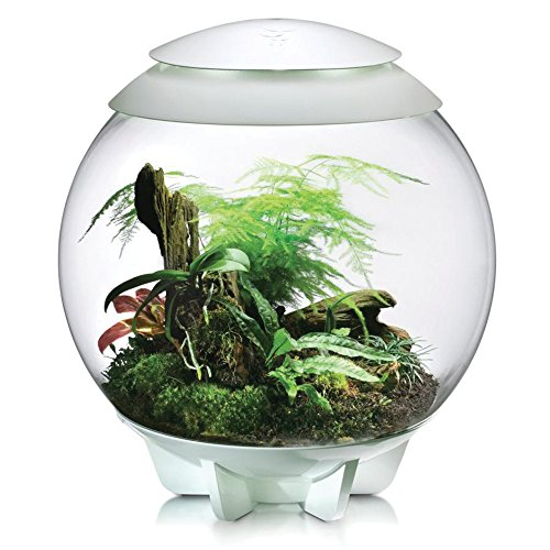 biOrbAIR Terrarium – 16 Gallon, White
