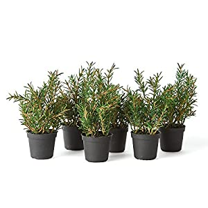 "Napa Home & Garden Rosemary 6.5"" Drop-in, Set of 6 22"