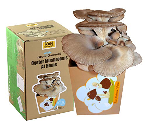 Root Mushroom Farm Oyster Mushroom Growing KitMultiple flushes