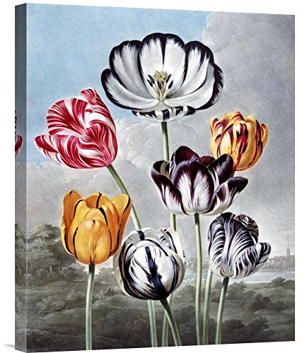 Robert John Thornton Tulips - tulip wall art