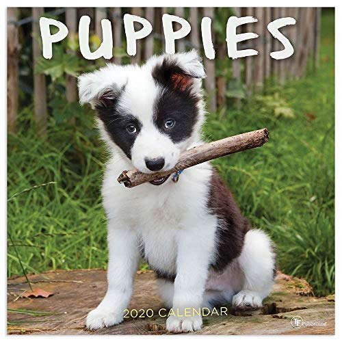 2020 Puppies Wall Calendar