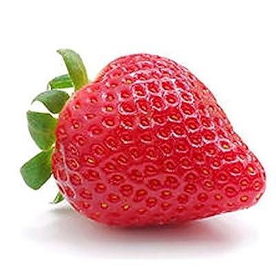 25 Seascape Strawberry Plants - Everbearing, Organic NON-GMO : Garden & Outdoor