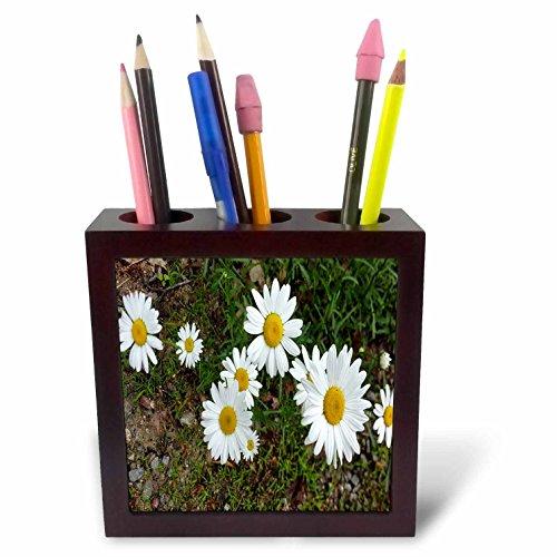 3dRose TDSwhite – Summer Seasonal Nature Photos - Pretty Daisies Full Bloom - 5 inch Tile Pen Holder (Bloom Pen)