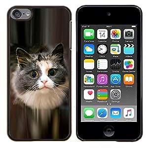 YiPhone /// Prima de resorte delgada de la cubierta del caso de Shell Armor - Lindo gato felino mascota peluda gris de pelo largo - Apple iPod Touch 6 6th Touch6