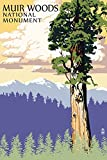 Muir Woods National Monument, California - Towering Redwood