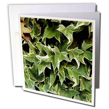- 3dRose Taiche - Acrylic Painting - Ivy Leaves - Variegated Ivy - 6 Greeting Cards with envelopes (gc_298297_1)