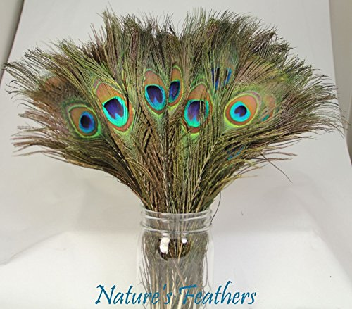 200 PCS High Quality Real Natural Wholesale Peacock Feathers, 10 to -