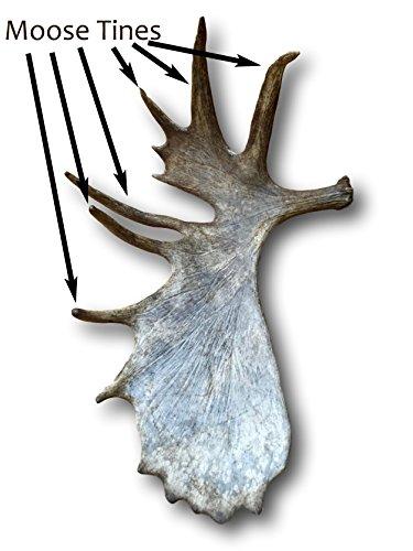 Moose Antler Chew - 6