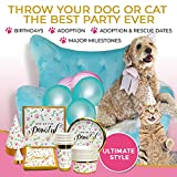 Party Supplies - for Dogs and Humans to Party Together | Birthday and Celebration Tableware Set Serves 10 People and 10 Pups | Disposable Paper Plates, Napkins, Cups, Bowls, Large and Mini Party Hats