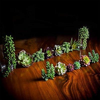 SEEKO Artificial Succulents - 14 Pack - Create Realistic Succulent Arrangements, Faux Potted Succulent Decor, and Fake Succulent Planters for Your House or Apartment