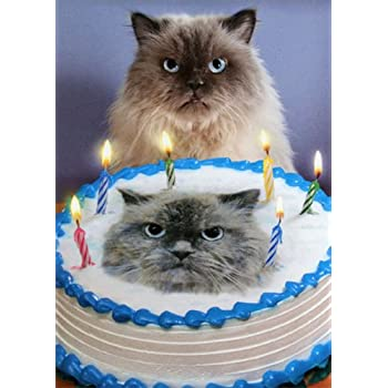 Cat And Cake Look A Like