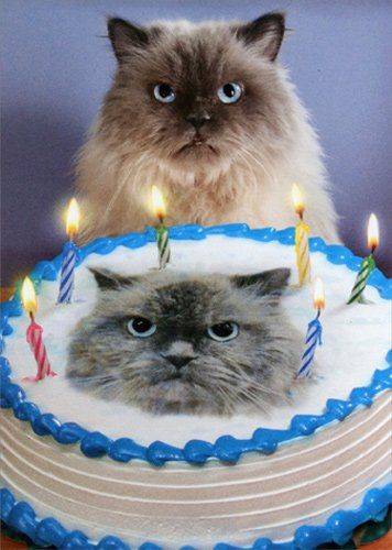 Amazon Cat And Cake Look A Like
