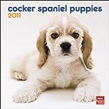 Cocker Spaniel Puppies 2011 7X7 Mini Wall