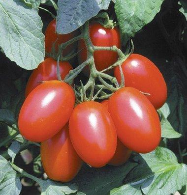 David's Garden Seeds Tomato Plum Juliet DGS707 (Red) 25 Hybrid Seeds