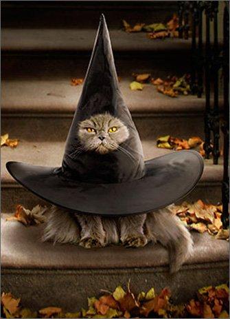 Cat Inside Witch Hat - Avanti Funny Halloween Card -
