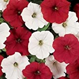 ~ Easy Wave O'canada Mix * Trailing Petunia * 20 Pelleted Seeds