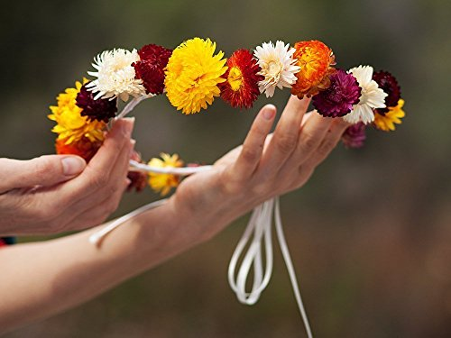 Dried floral halo crown mums chrysanthemums red, maroon, white and yellow. Dried hair accessories flower crown rustic bride, rustic wedding