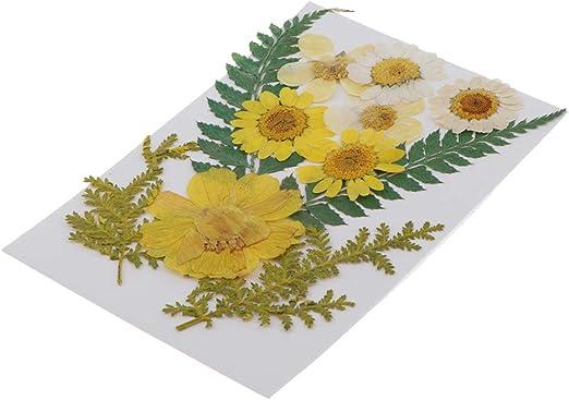 12x Pressed Fern Leaves Organic Dried Flower DIY Art Craft Floral Decoration
