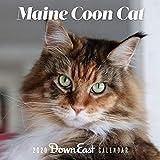 2020 Maine Coon Cat Wall Calendar
