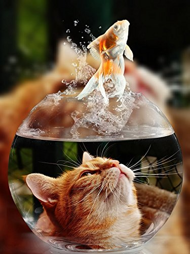 Home Comforts Peel-n-Stick Poster of Glass View Close Face Goldfish Eyes Cat Portrait Poster 24x16 Adhesive Sticker Poster Print