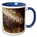 3dRose VWPICS MACRO INSECTS - Lepisma saccharina or Silverfish - 11oz Two-Tone Blue Mug (mug_23010_6)
