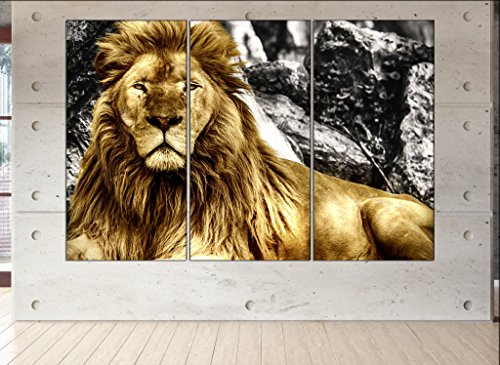 Lion wall art Lion canvas Lion print Lion large canvas Lion wall decor