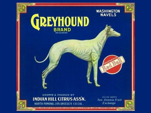 "CANVAS Crate Label with Greyhound DOG Bred for Coursing Game and Racing North Pomona Los Angeles 12"" X 16"" Image Size Poster Reproduction ON CANVAS"