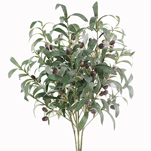 Olive Fruit - Htmeing 28