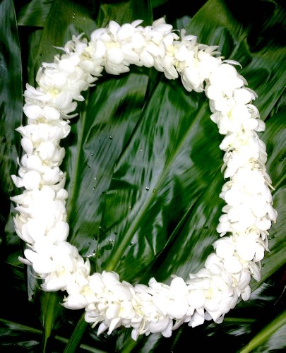 (Fresh Hand Made Dendrobium Orchid Lei White)