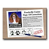 English Springer Spaniel Rap Sheet Fridge Magnet No 2