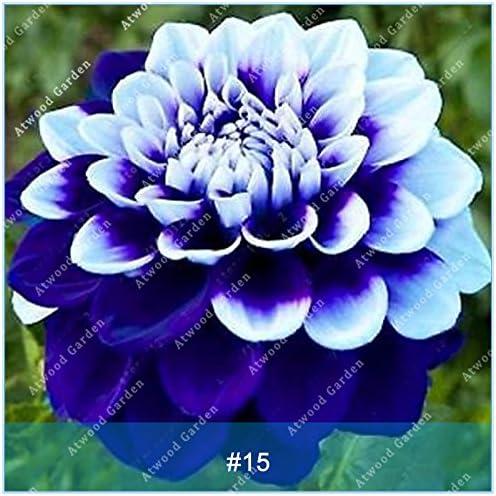 ZLKING colorido 2pcs dalia bulbos de flores raras Hermosa perenne dalia bulbos de flores de plantas Bonsai DIY jardín de la boda 15: Amazon.es: Jardín
